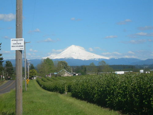 Mount Hood looms over the berry fields