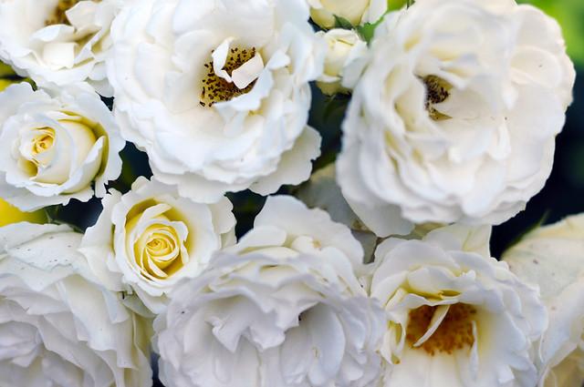 glitter_roses_1