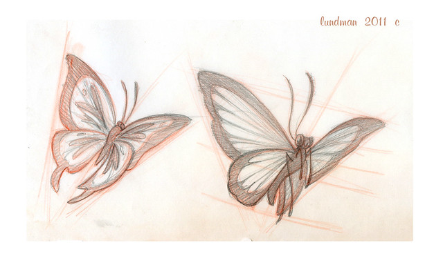 Lundman_butterflystudies002