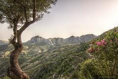Un paraiso llamado Peñaescrita (carloscASTROweb) Tags: parque españa beauty landscape interesting spain europa natural paisaje granada animales hdr altura reserva almuñecar andaluca peñaescrita