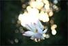 Lotus flower - IMG_7698 (Bahman Farzad) Tags: flower macro yoga peace lotus relaxing peaceful meditation therapy lotusflower lotuspetal lotuspetals lotusflowerpetals lotusflowerpetal