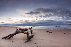 Early morning on Alnmouth Beach, Northumberland (7755) (Ruthie H) Tags: sea beach seascape landscape driftwood shore shoreline alnmouth northumberland pentax k3 1017 seaside seascae