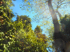 (Psinthos.Net) Tags: psinthos     valley psinthosvalley nature   countryside sunnyday day   noon      treebranches trees planetrees     planetree treetrunk treetrunks    tree leaves    autumnleaves fallenleaves    bluesky sky light sunlight    sunrays  wildivy  brambles     branches shrubs shadow     september autumn