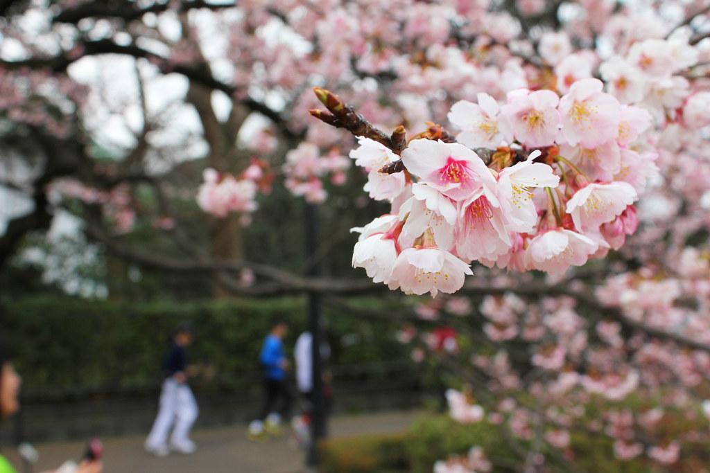 Spring has come (4)