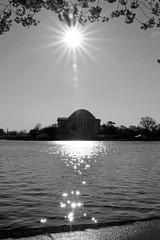 Jefferson Memorial (ajemm) Tags: morning bw sun reflection water monochrome canon cherry blackwhite dc memorial blossoms basin flare jefferson tamron tidal 28300mm 500d