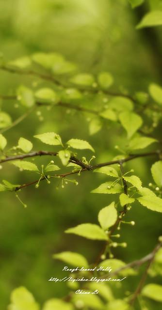 台北植物園【春初野記】