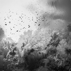 Liquid Garden (Hengki Koentjoro) Tags: ocean sea white fish black water garden square photography soft underwater surreal diving h2o ethereal liquid corals