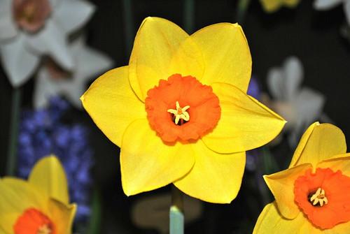 Bradner Flower Show
