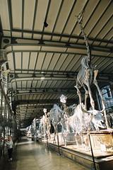 Galerie de Paléontologie (kygp) Tags: paris france colour analog skeleton photography sophie jardin des musee bones avril plantes squelette 2011 paleontologie
