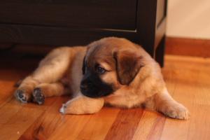 puppies005