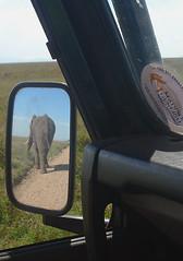 Serengeti Elephant 2