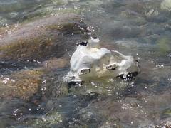 IMG_0534.JPG (RiChArD_66) Tags: kreidefelsen rgen strandkreidefelsenrgenstrand