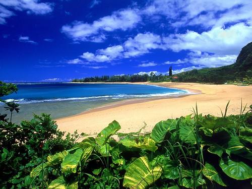 hawaii beach wallpaper. Hawaii-Beach-Wallpaper