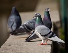 Birds (1 of 1) (Martin Hesketh) Tags: delete10 delete9 delete5 delete2 delete6 delete7 save3 delete8 delete3 delete delete4 save save2 save4