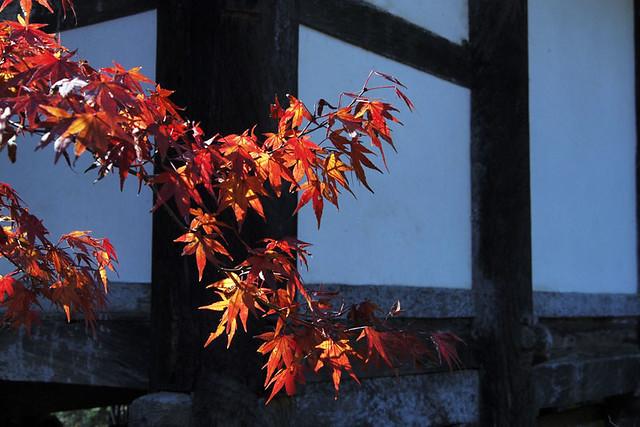 20101120_115744_栄山寺