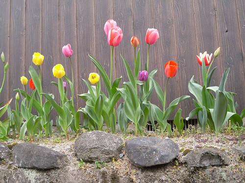 春の花々@明日香村-28