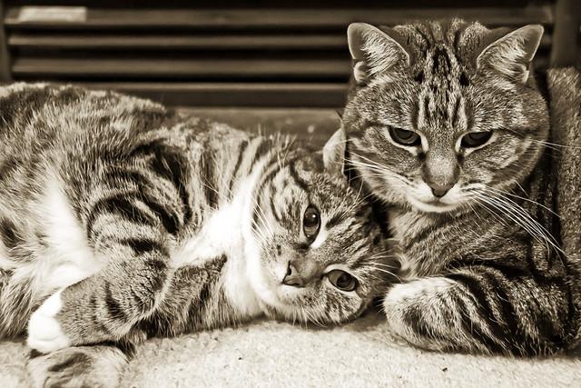 cats_2009_1106_2