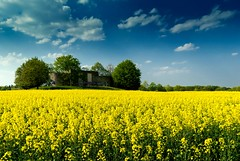 Flowering rape field with water storage (KF-Photo) Tags: field yellow graffiti spring dream feld rape raps frhling acker rapsfeld yellowfield rapefield waterstorage wasserspeicher pfrondorf sophienpflege gelbertraum