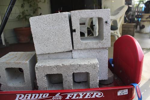 bricks and a spider