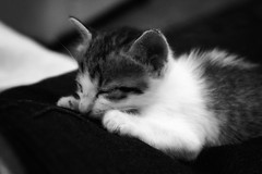 Snooze (syntaxfree) Tags: blackandwhite baby cute cat kitten nap sleep adorable snooze stray