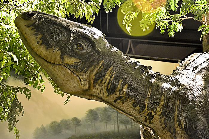 Dino @ Creation Museum