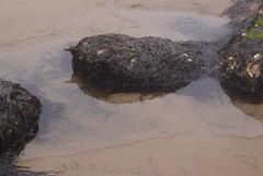 (Skellibobs) Tags: sea beach pool rock coast sand north east reighton
