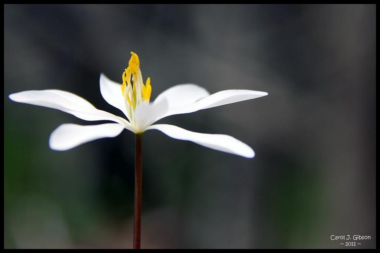2011 - 365/114 Little Flower in the Woods