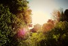 GOPR0097 (Schuyler Van Loon) Tags: california trees santacruz tree sunny fisheye lensflare seabright gopro oceanveiw
