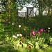 Easter Sunday in my sisters cottage garden