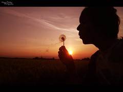 Make a wish ~ Explore #20! (henrypotter.) Tags: sunset sky orange flower adam beauty silhouette yellow clouds photography golden colours leicestershire potter blowing seeds clear henry hour finepix fujifilm quorn quorndon s1800