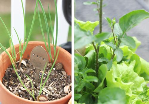 dill&lettuce