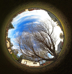 It's five o'clock somewhere (MikeAncient) Tags: sky panorama tree yard lawn projection sphere crackwillow salixfragilis terijoensalava