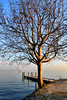 The Great Tree (EC@PhotoAlbum) Tags: tree nikon garda albero lagodigarda puntasanvigilio gardaslake nikond3100