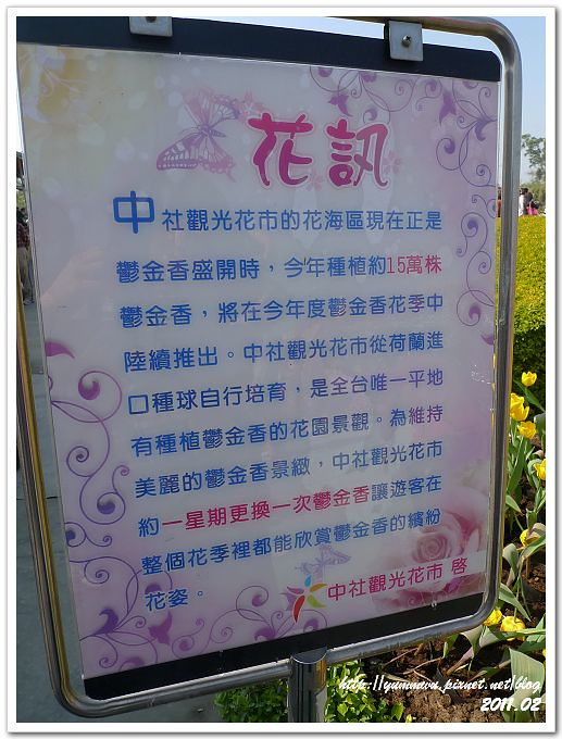 后里中社觀光花市 (3)