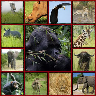 Tips for taking an African Safari Kenya, Travel Tips in Kenya, Tanzania and Uganda, Safari tips, Tour tips in Africa, Safari tips in Kenya and Tanzania