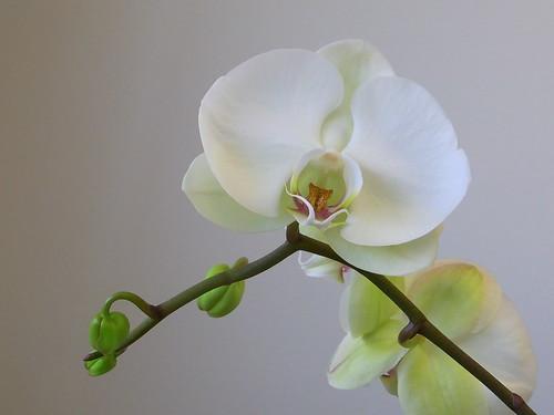 Flower 2of4