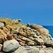 Corse du sud, Porto-Vecchio, Punta di Benedettu, une crique 16 et ses rochers