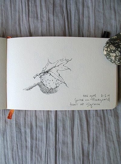 Squam Sketch_2