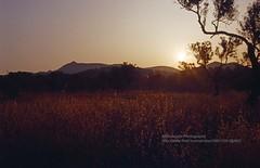 Mallorca, Puerto de Alcudia, Sunrise (blauepics) Tags: spain spanien espaa katalonien mallorca majorca balearic balearen insel island islas baleares puerto de alcudia sunrise sonnenaufgang field feld light licht sun sonne