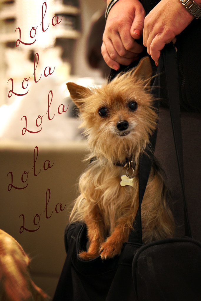 And at CB2, I Met Lola - Isn't She Adorable?!