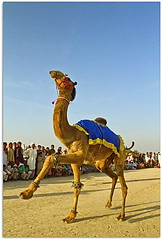 desert dance (TARIQ HAMEED SULEMANI) Tags: pakistan tourism river desert tariq bahawalpur rohi panjnad yazman punjan concordians sulemani
