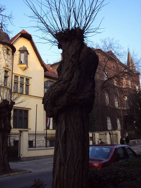 tree silhouette that looks like man in Budapest