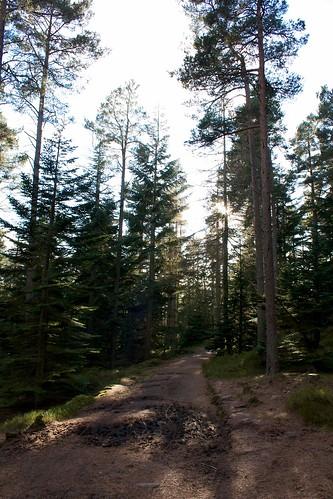 Glen Dye wood