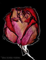 Every Rose has its thorn (KirstenH1972) Tags: flowers friends beautiful rose thorns imageonblack