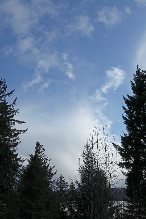 blue sky, clouds, and trees, Kasaan, Alaska