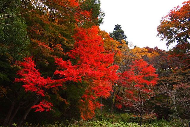 20101120_084832_談山神社