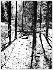 Wintersend (artphoto2005) Tags: longwoodgardens wintersend photoshopcs3 bwconversions
