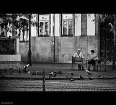 contacto visual / look contact (- GD photography -) Tags: parque bw white black blancoynegro blanco portugal blackwhite negro porto bancos palomas mirada oporto mirando blackwhitephotos
