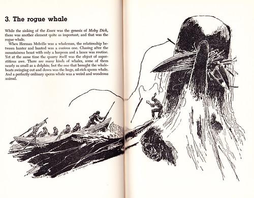 yankee whalers_0004