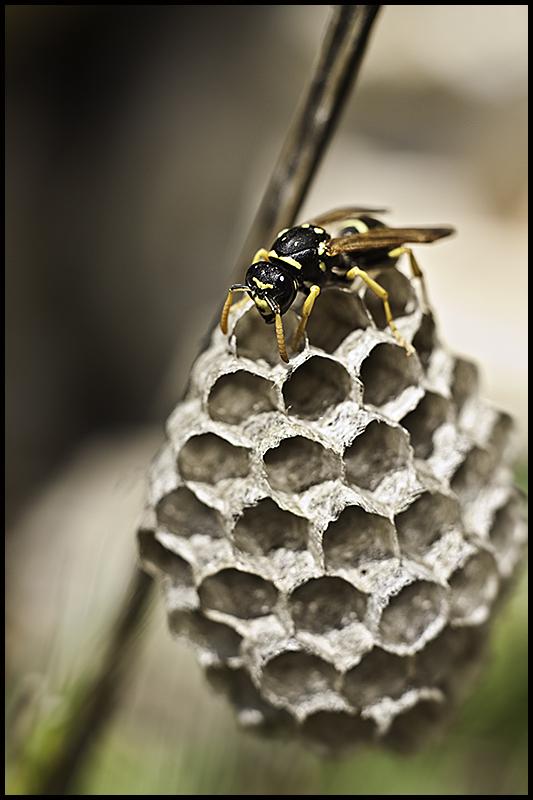 Y la miel??